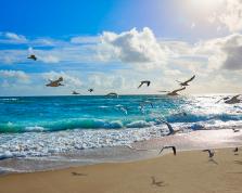 Perché il mare fa bene al cervello e rende felici
