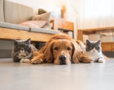 Cosa c'è dietro l'amore per gli animali?